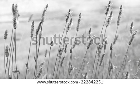 Detail of some wildflowers in the countryside in black and white - stock photo