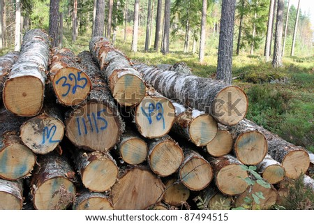 Detail of stacked birch logs in autumn sunlit forest. - stock photo