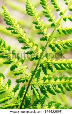 Detail of the fronds of a big fern plant in the forest. - stock photo