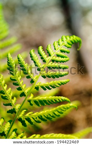 Detail of the fronds of a big fern plant in the forest with multicolored spots of light in the background. - stock photo