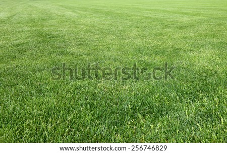 Detail of the lawn of the famous Miracle Square (Italy-Tuscany-Pisa) - stock photo