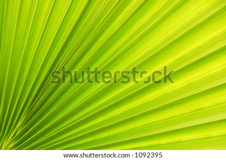 Detail of the palm leaf - stock photo