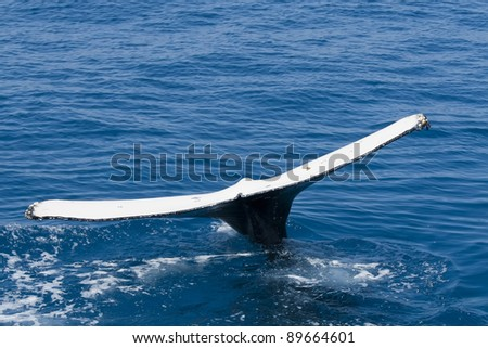 Detail of the tail of a humpback whale. The photo was taken near Fraser Island in Australia. - stock photo