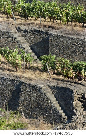 Detail of the world famous terraced vineyards of Porto wine. - stock photo