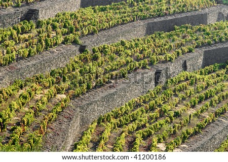 Detail of the world famous terraced vineyards of Porto wine