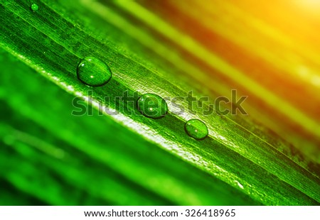 Detail of three water drops on green leaf - stock photo