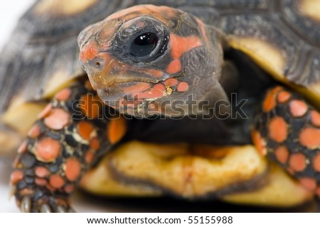 Detail of Tortoise face - stock photo