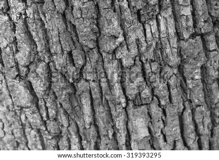 Detail of tree bark - stock photo
