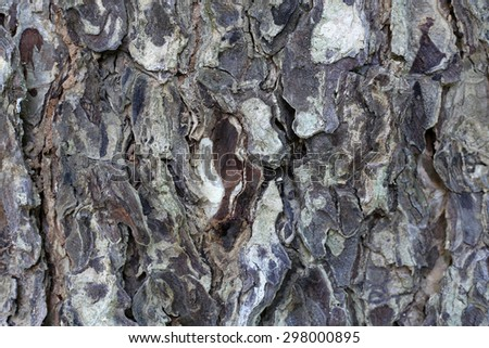 Detail of tree bark, black and white - stock photo
