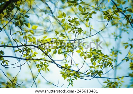 Detail of tree branche in spring - stock photo