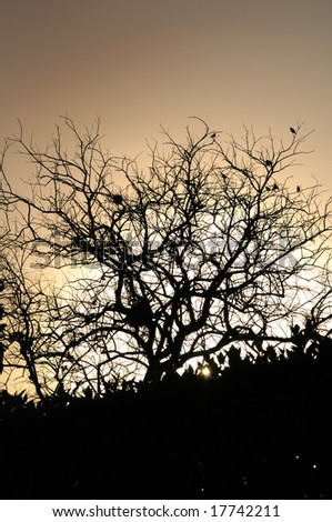 Detail of tree silhouette and branches against sunset background