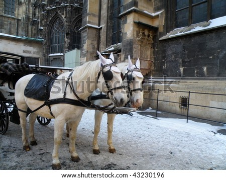 detail of two white horses in christmas vienna - stock photo