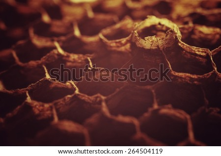 detail of wasp nest - stock photo
