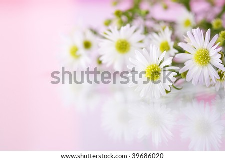 Detail of white flowers with reflection on pink background - stock photo