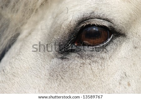 Detail of white horse head with long eye-lashes - stock photo