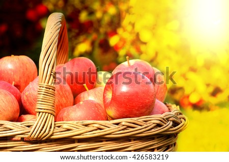 Detail of wicker basket full of red apples in foreground and apple trees in background at sunset stylized to fall theme - stock photo