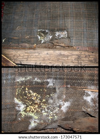 Detail of wood fungus from wooden floor extending on a carpet. The fungus is growing on damp environment, so the carpet is  helping in a bad way. - stock photo