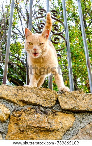 Detail on a cat meowing in a fence with fierce or angry expression