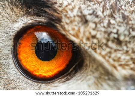 detail right eye owl eagle - stock photo