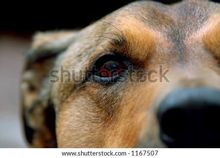Detail shot of a dog's face. - stock photo