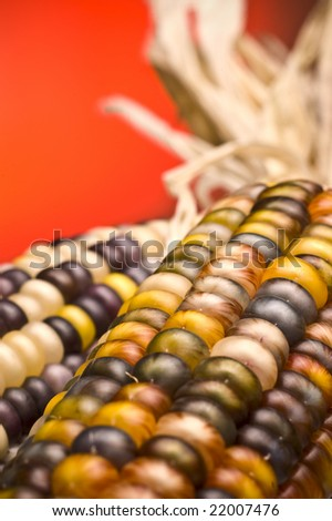 Detail shot of brightly colored indian corn at Thanksgiving (shallow focus) - stock photo