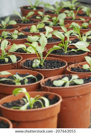 Detail shot of seedlings in plant pots - stock photo