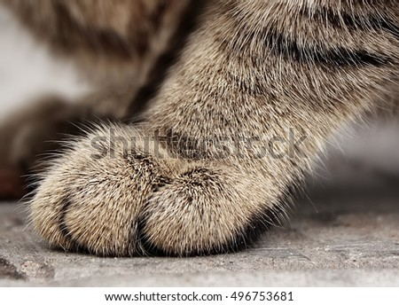 Detail shot of soft Cat paws. Shallow DOF
