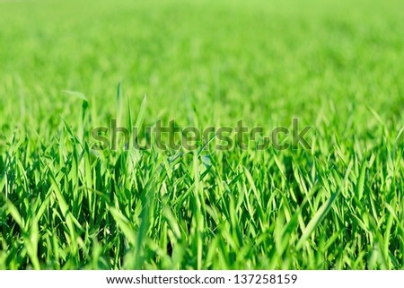 Detail view of green grass in garden in spring