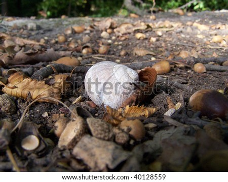 Detail view of snail shell on autumn ground