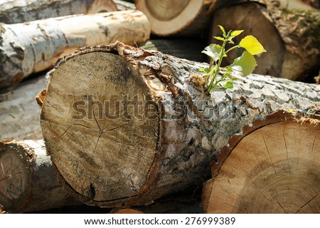 Detail with green leaf on pile of logs sorted in sawmill yard ready as resource - stock photo