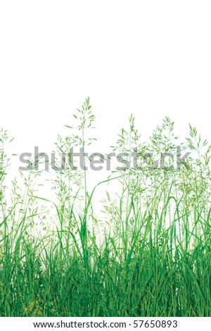 Detailed Abstract Meadow Grass Background Isolated On White