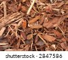 Detailed bark texture, perfect for a background - stock photo