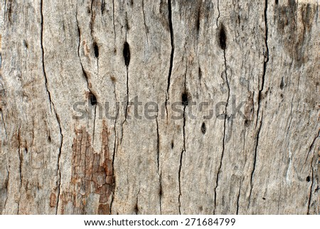 Detailed close up on drying tree trunk. Image has grainy instragram effect and only suitable for background purposes. - stock photo