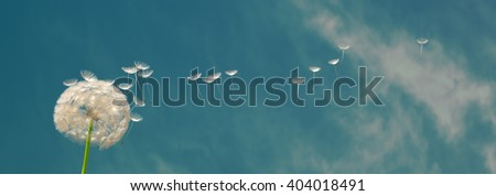 Detailed dandelion in front of blue sky with single elements