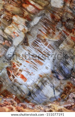 Detailed drawing of petrified wood - stock photo