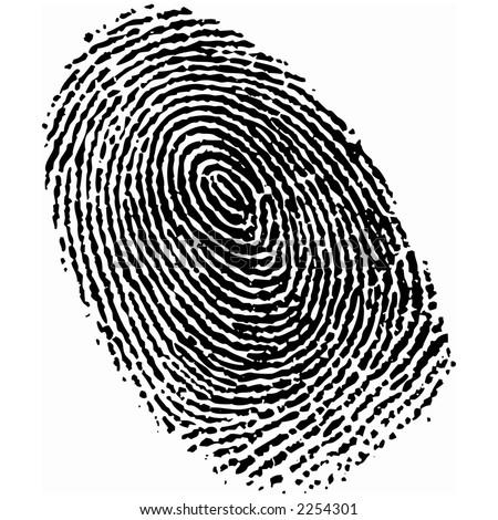 Detailed fingerprint image - stock photo
