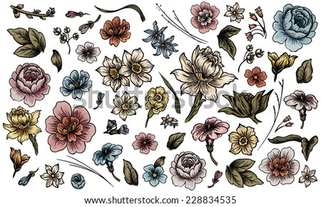Detailed hand drawn flower and leaf set - stock photo