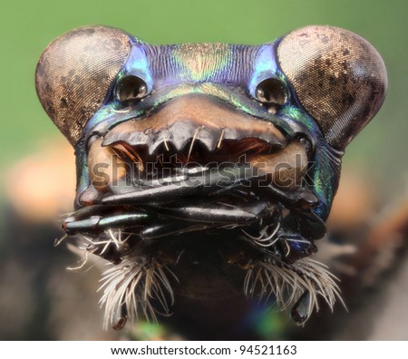Detailed highly magnified focus stacked image of the head capsule of a Tiger Beetle - stock photo