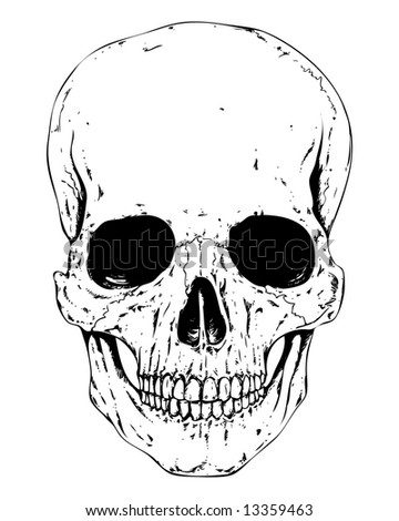 detailed human skull image - stock photo