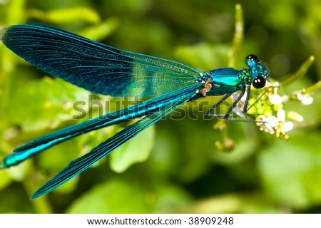 Detailed macro image of dragonfly on green plant - stock photo