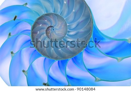 Detailed photo of a halved backlit  shell of a chambered nautilus (Nautilus pompilius). Blue tint - stock photo