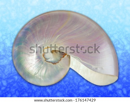 Detailed photo of a pearl shell of a nautilus (Nautilus pompilius) on marine background. - stock photo