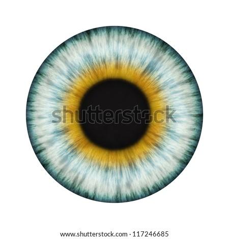 Detailed Realistic Eye Texture - stock photo