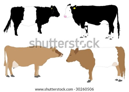 Detailed series of illustrated cows - stock photo