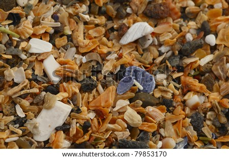 Detailed Shell Particles. A macro of shell particles at the Sand Beach in Acadia National Park, Maine, United States. - stock photo