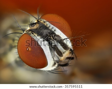 Detailed study of Fly head stacked from many images into one sharp photo.  - stock photo