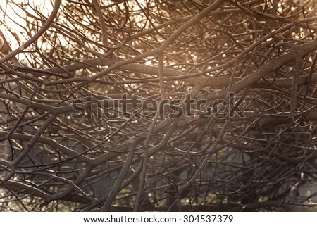 Detailed tree branches without leaves, Fall background - stock photo
