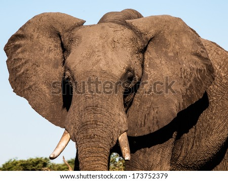 Detailed view of elephant's head in sunny day - stock photo