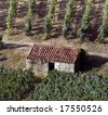 Detailed view of the world famous vineyards of Porto wine with a small shack used to collect tools during harvest season. - stock photo