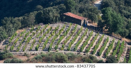 Detailed view of the world famous vineyards of Porto wine with a small shack used to collect tools during harvest season - stock photo